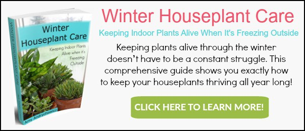 Prayer plants are non-toxic house plants