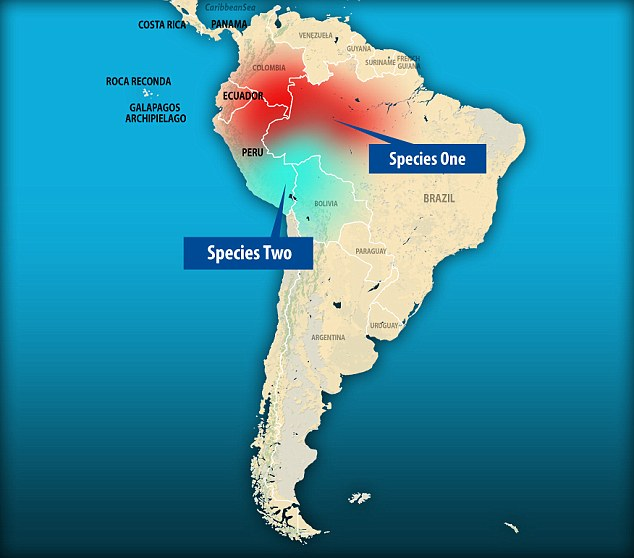 This map of South America shows where the two pygmy marmoset species reside