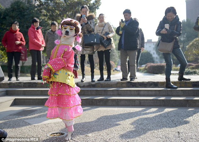 Popular: Passers-by take photographs of Xiaoniu as she strolls along in bright pink clothing