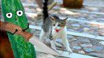 Почему коты боятся огурца – Почему коты боятся огурцов: объяснение и подборка видео