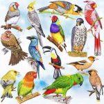 Комнатные птички – Топ-10 птиц для домашнего содержания