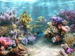 Как приклеить фон на аквариум без пузырей – как наклеить (4 способа), виды, сделать фон своими руками