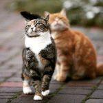 Фотографии кошки – Ой!