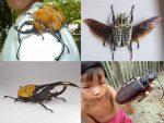Гигантский жук – Гигантские жуки нашей планеты (7 фото)