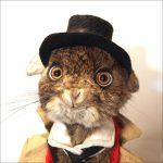 Упоротые картинки животных – Смешные стоп-кадры с животными (186 фото)