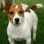 Порода собаки из кф маска – Собака из маски — описание породы и цены на щенков