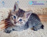 Прививка от чумки котенку – Прививка от чумки кошке и коту