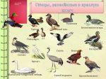 Редкие птицы россии фото с названиями – Птицы Красной Книги России – описание, фото и названия