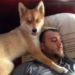 Собака лисенок – маленькая рыжая собачка с короткими лапами, пушистая собака с большими ушами и другие породы